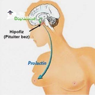 prolaktin